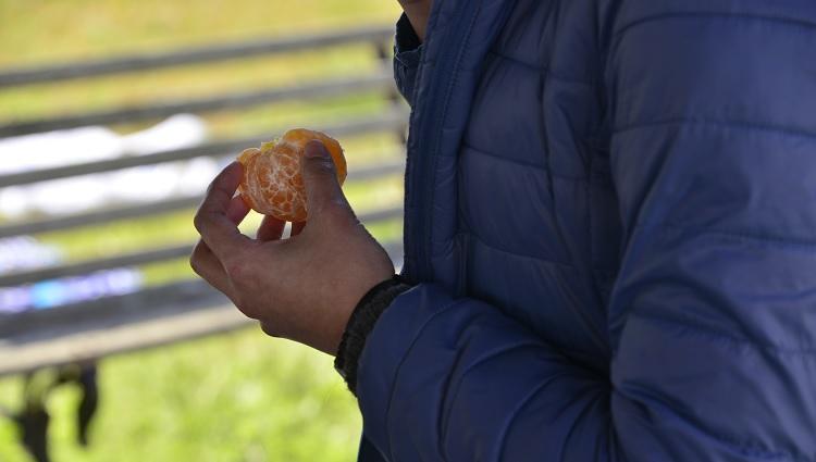 Mão segurando uma bergamota descascada
